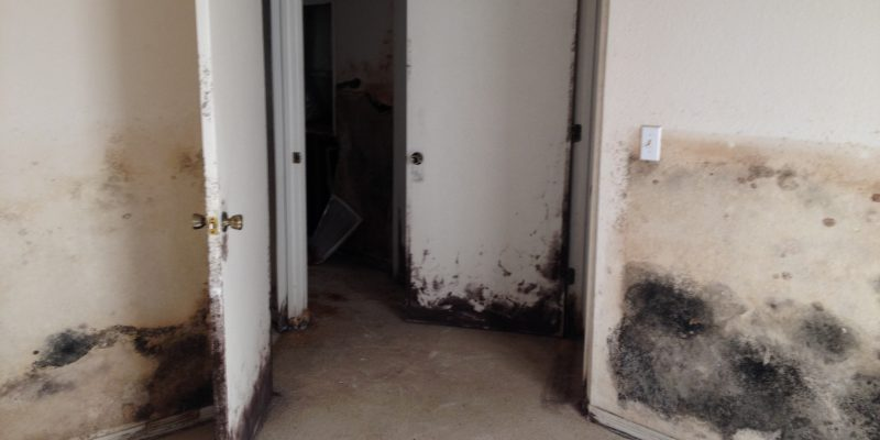 Black mold symptoms in St Petersburg from Able Builders