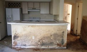 Mold Remediation Tampa - Mold Inspections Tampa Able Restoration