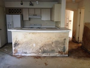 Mold Removal Clearwater